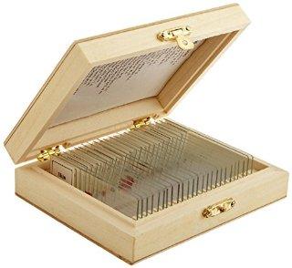 AmScope - Vetrini per microscopio preparati con scatola in legno, 25 vetrini
