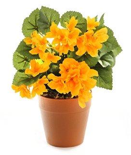 Recensioni dei clienti per Più vicino 2 HBC009YE natura - piante artificiali Vineyard porro 105 cm | tripparia.it